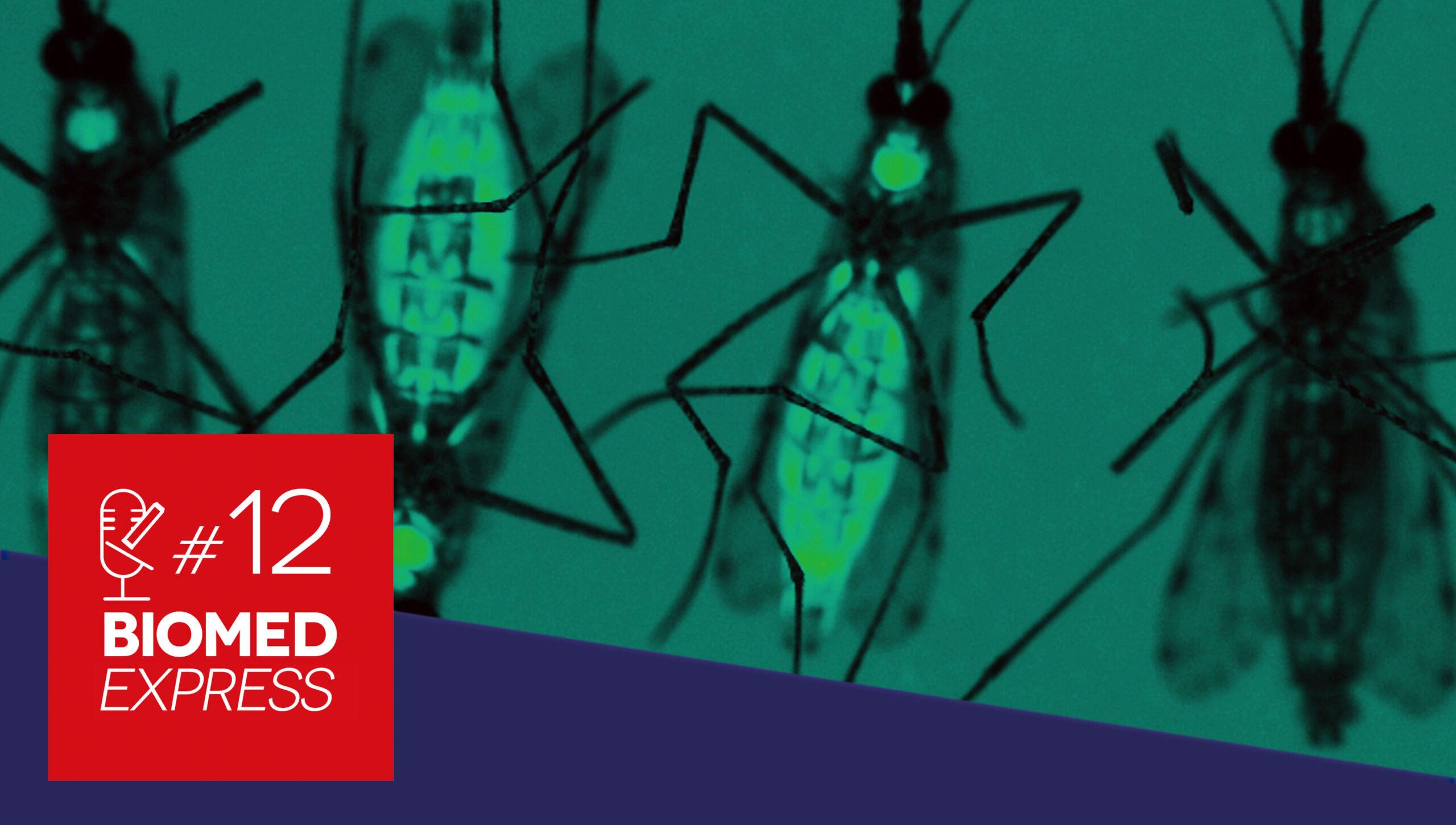 #12 Biomed Express – Vírus Mayaro: O novo Zika?